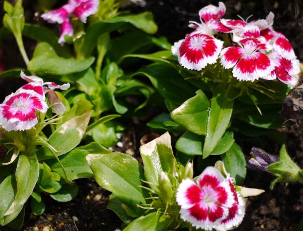 tiny fleurs