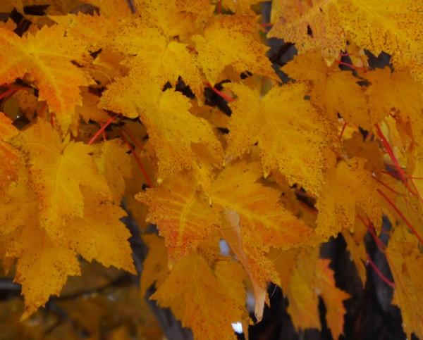 leaves1 (2)