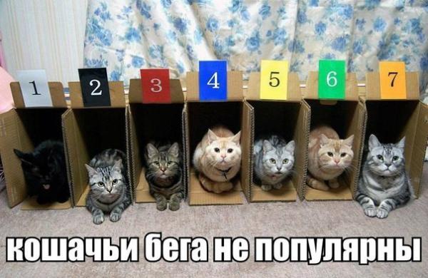 Котики 30