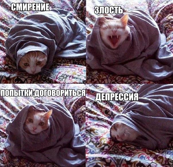 Без заголовка Обсуждение на Российский Сервис  кот