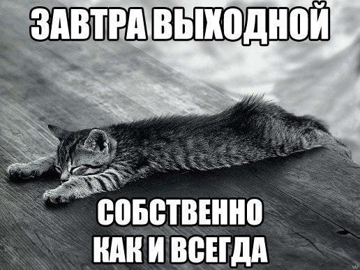 Котики 8