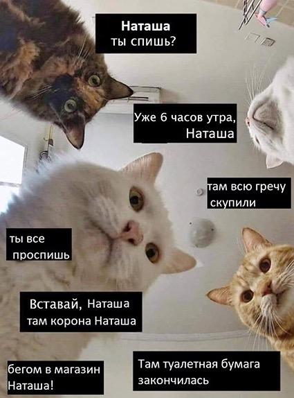 2020 год в мемах: обнуление, удаленка, печенеги, трусы Навального и другие