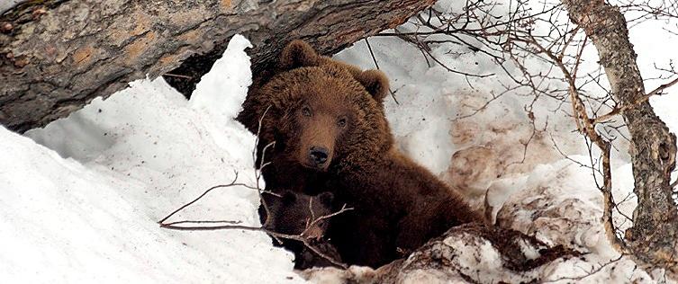 bears-wakeup-01