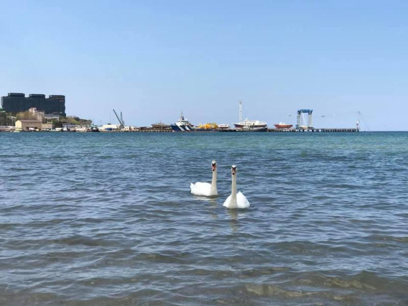 Лебеди в море) Вы тоже удивлены?