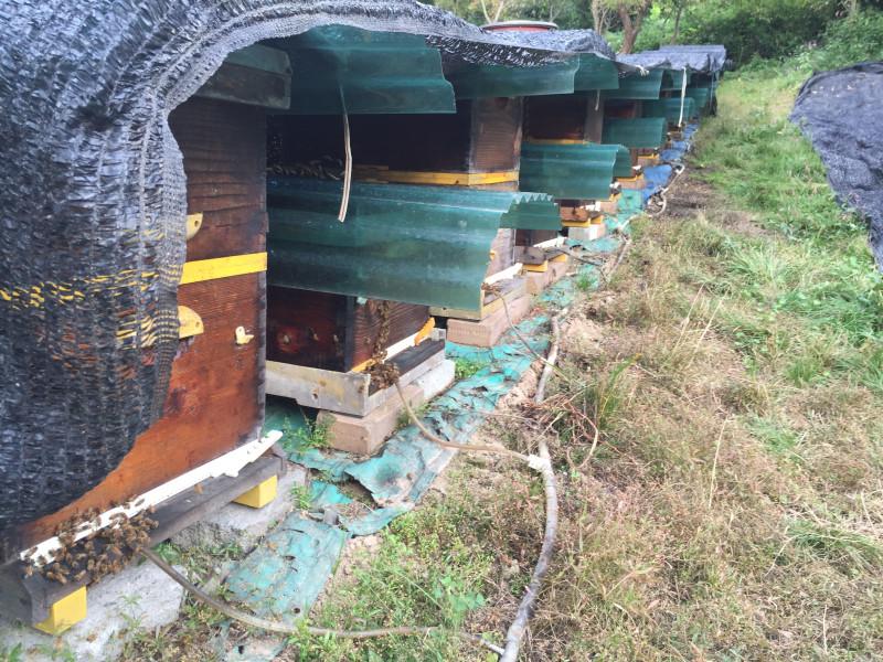 Капельная система поения пчел