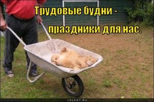 trudovyye-budni_1312568753