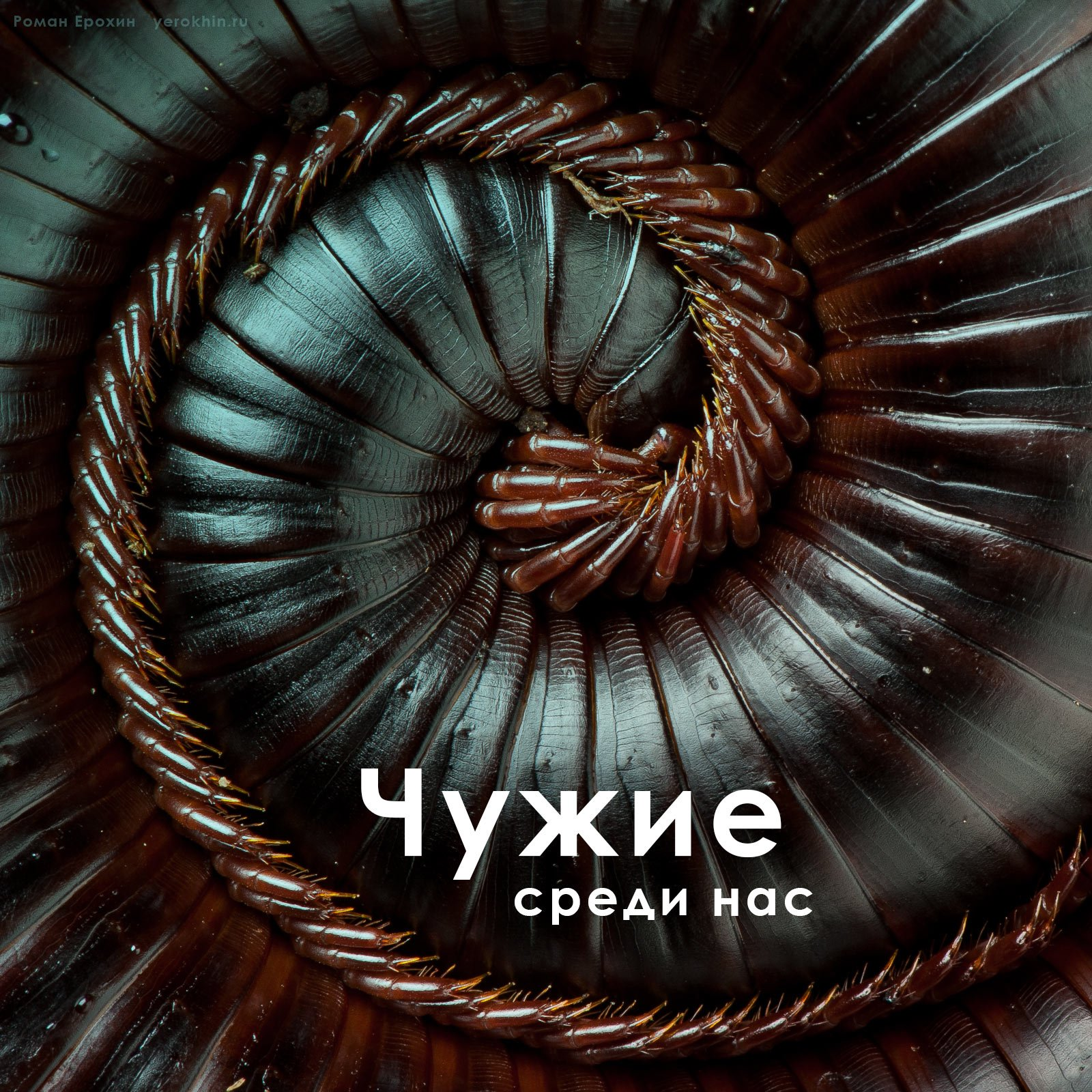 1_kivsyak-aliens-archispirostreptus-gigas