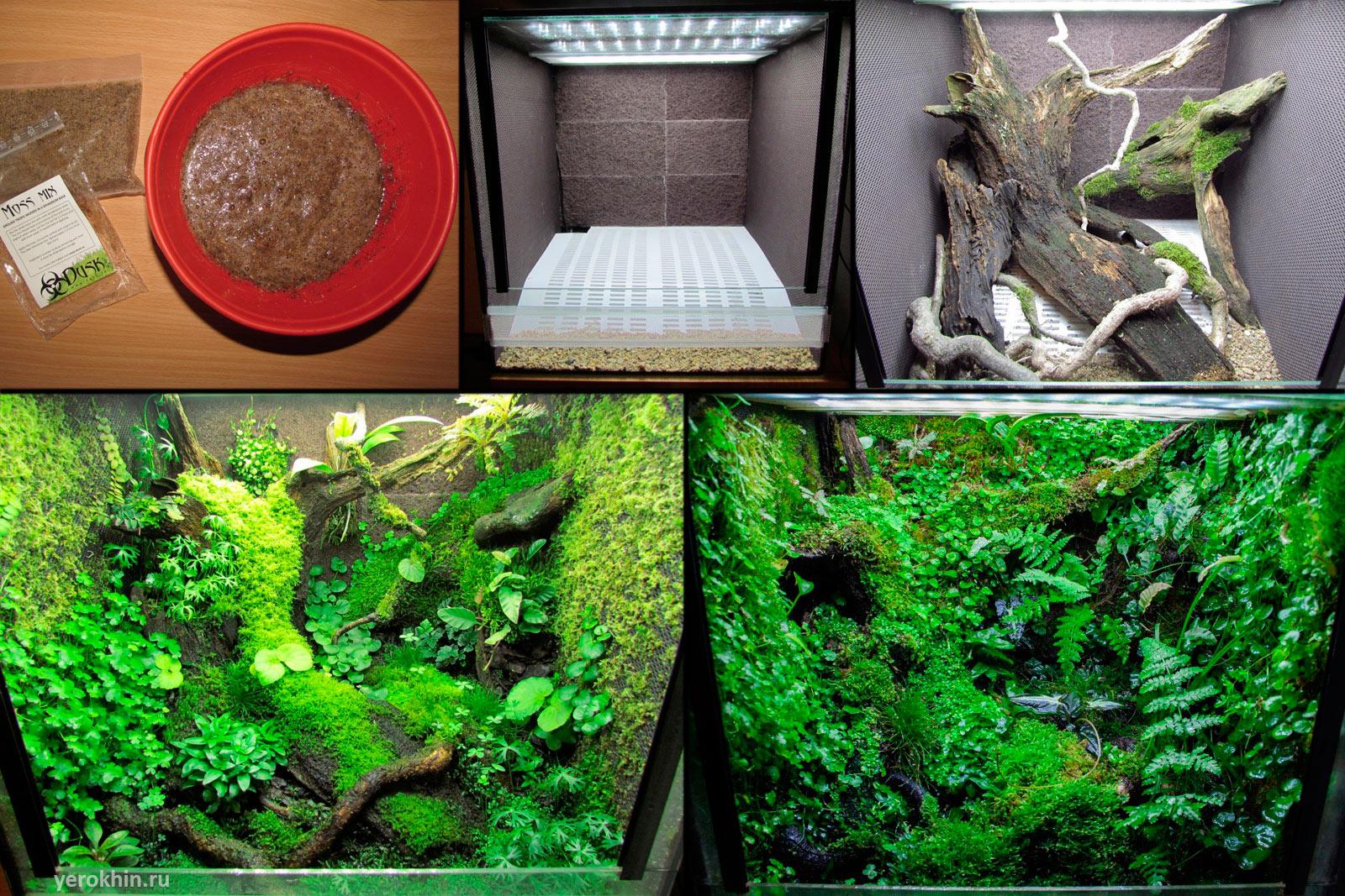 Террариум для наземных лягушек и жаб, размеры террариума 29