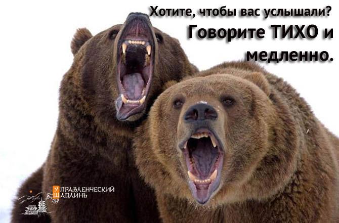 005_Медведи_тихо