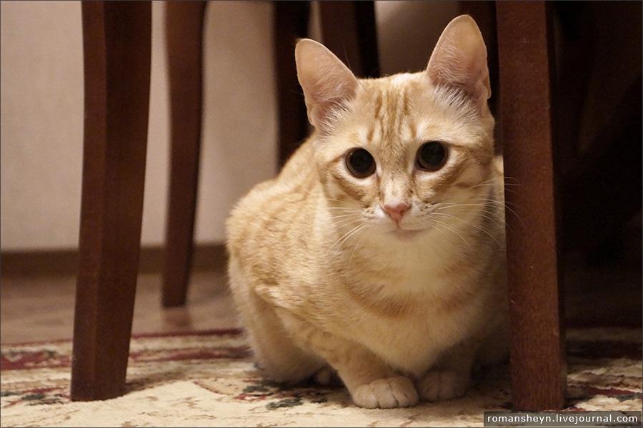 Мой кот балбес