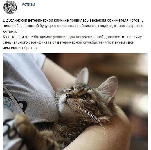Обниматель котов