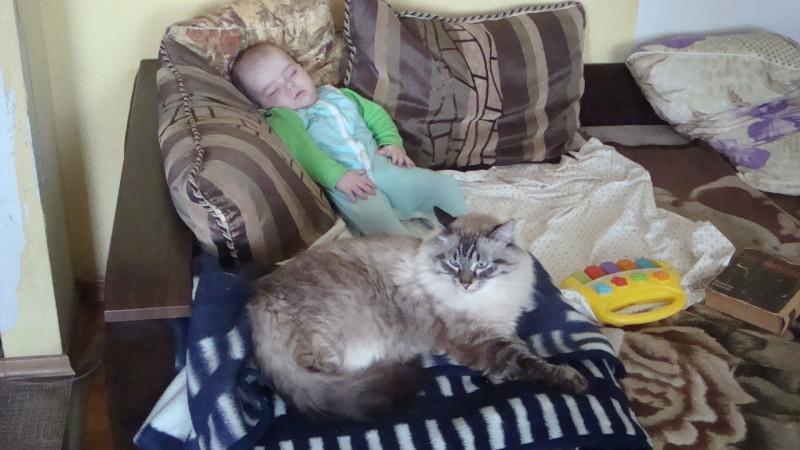 Кот сторожит болеющего ребенка.