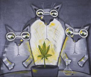 коты_марихуана