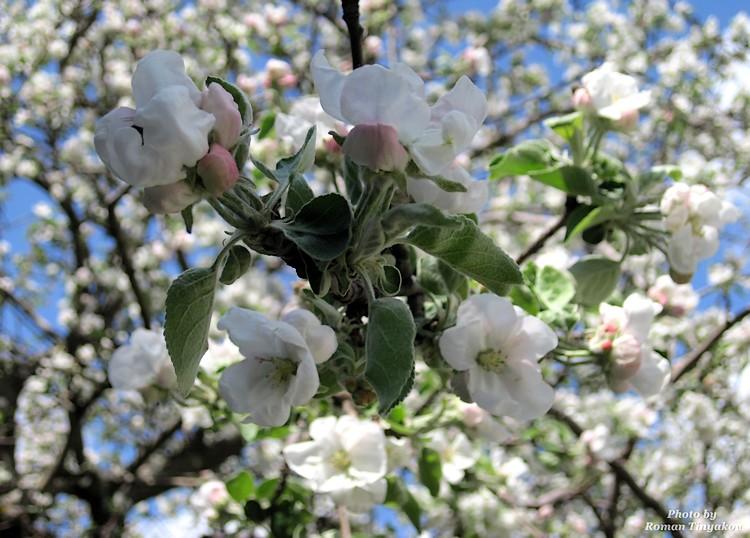 Весна как сон