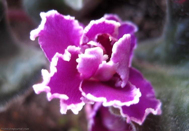 Цветок с подоконника