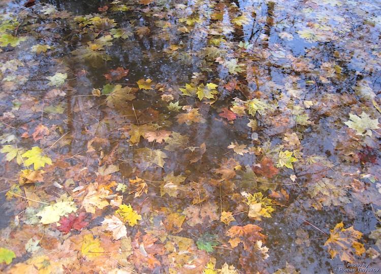 Зеркальная осень
