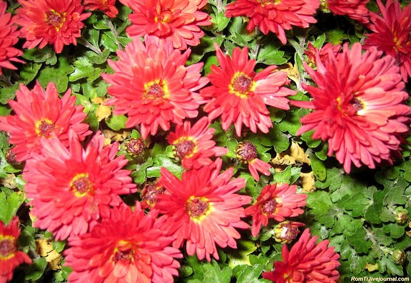 Цветы из поместья