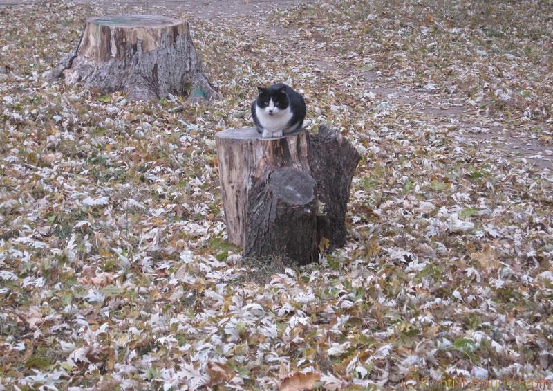 Кот на пне
