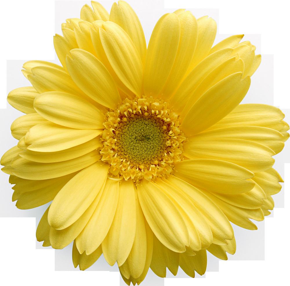 Цветочное солнце