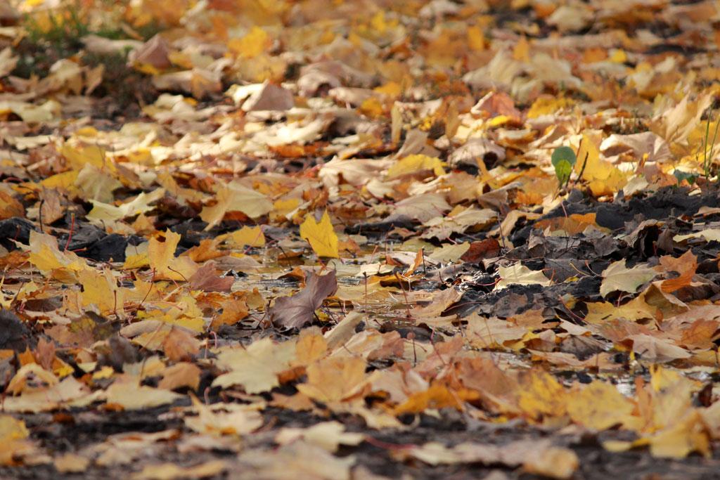 Осень е трутнева картинки