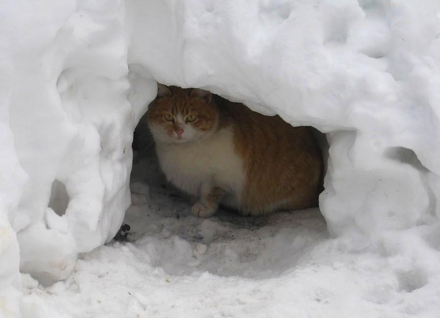Кот в берлоге