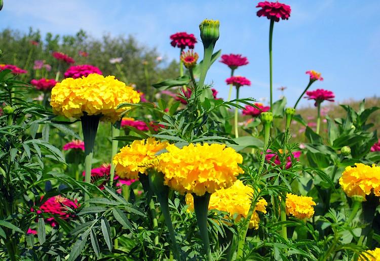 Цветы летом
