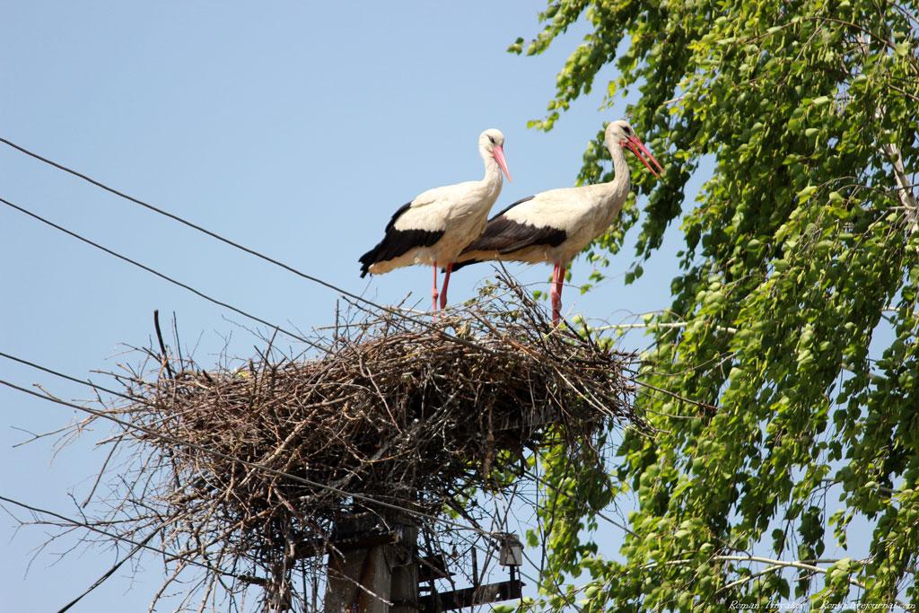 улице картинки гнездо аиста на дереве создаете