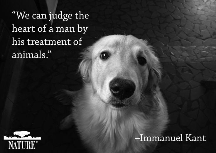 76bf8ccd9dea5ffff6bce1decb436a24--animal-cruelty-animal-rights.jpg