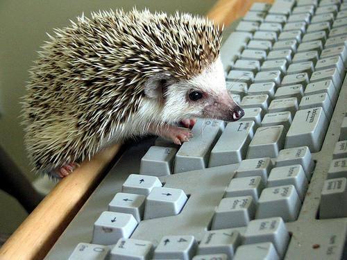 hedgehogkeyboard
