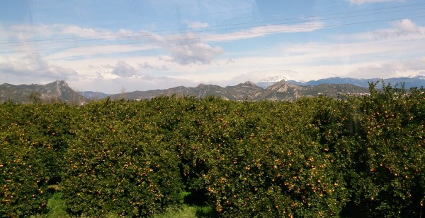 orange trees and mountains