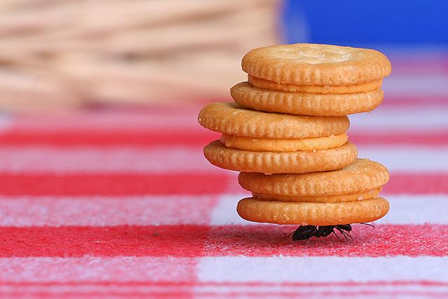 ant cookies