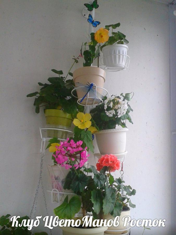 Цветы с положительной энергетикой