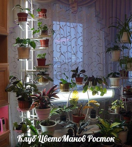 Подставки под цветы с подсветкой купить какие цветы пока не продаются на 8 марта в москве