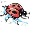 ladybug  jdoe1