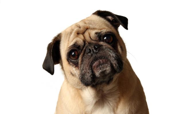 confused-dog.jpg