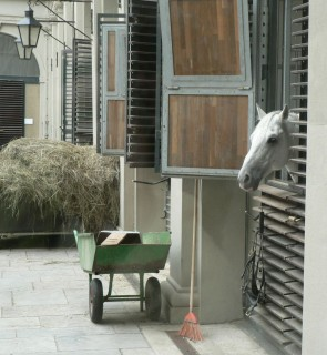 школа выездки лошадей