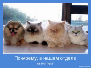 кошки мотиваторы