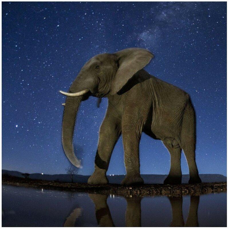 9 августа. Слон