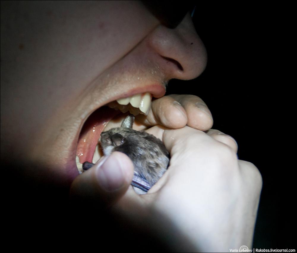 Поедая мышей
