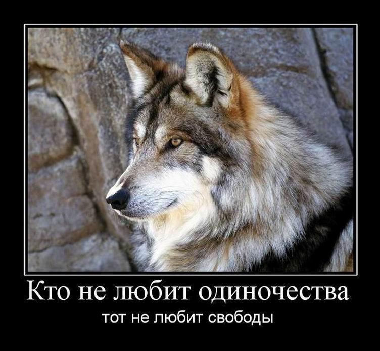 Картинка про волков с надписями со смыслом, днем