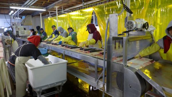 Рыбоконсервный завод на Алитаке