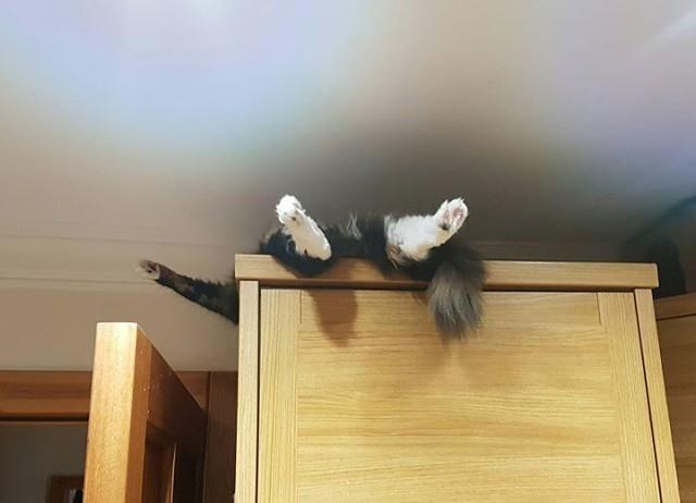 Иногда кот пугает меня своим поведением...))))