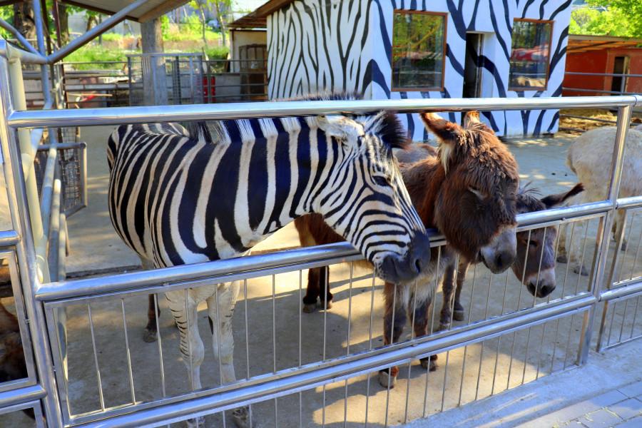 Зоопарк в Бахчисарае