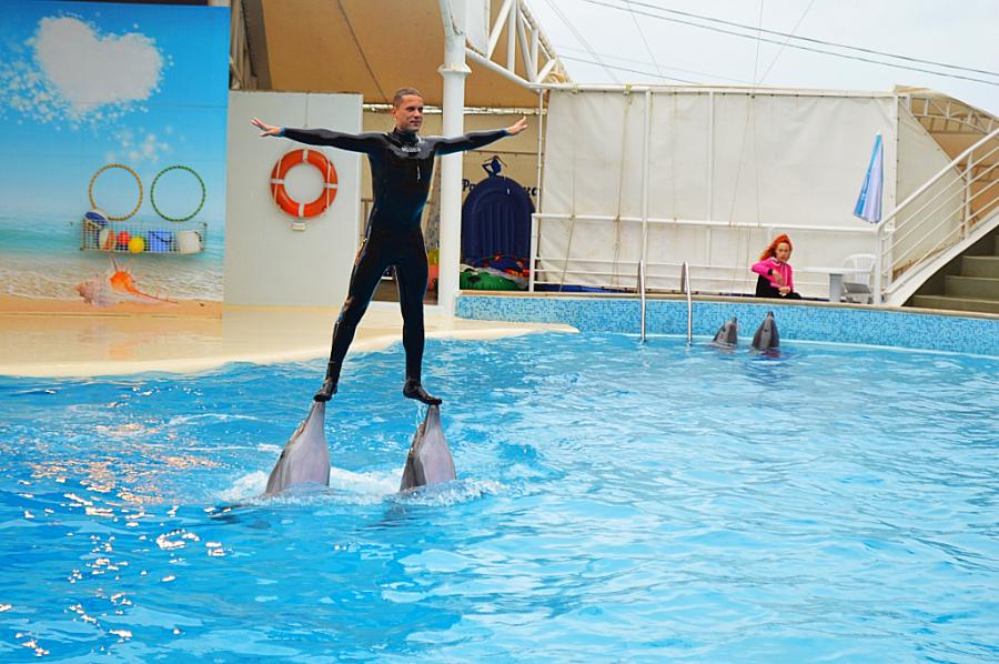 Дельфинарий Коктебеля идти или нет? момент, самом, Евпатории, отдав, Москве, Крыму, конечно, котики, танцуют, можно, много, дельфины, выступают, лучше, кончике, прошлом, лично, понравилось, решил, представление