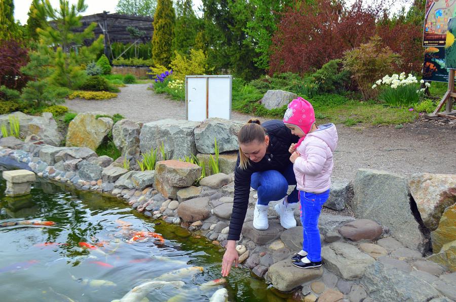 Сад сакуры в Днепре
