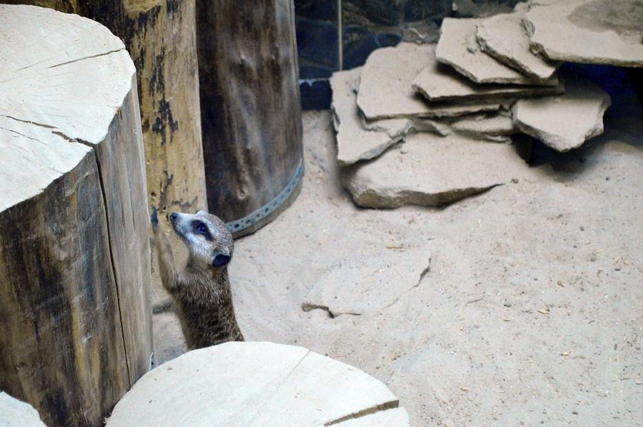 Каким должен быть зоопарк