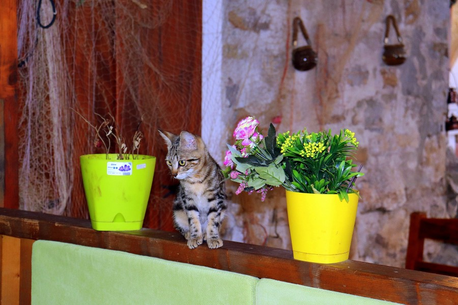 Страна кошек и котов