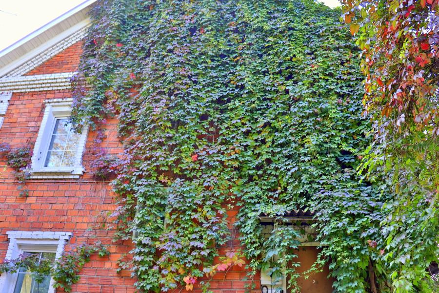 Разноцветная осень в Видном