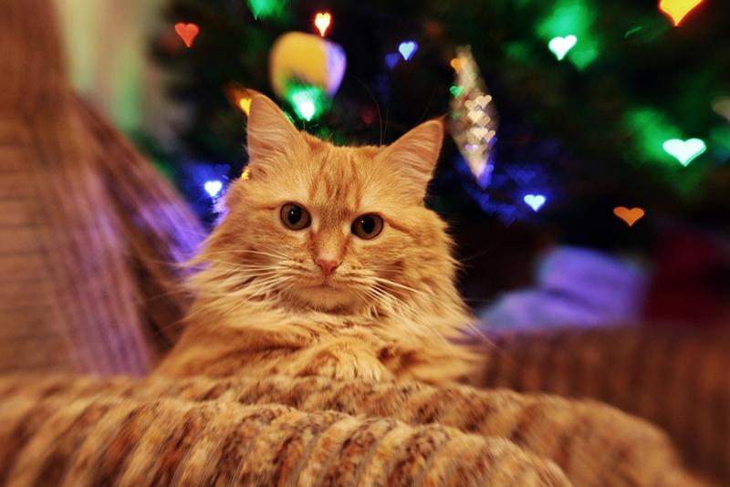 Где подарки?