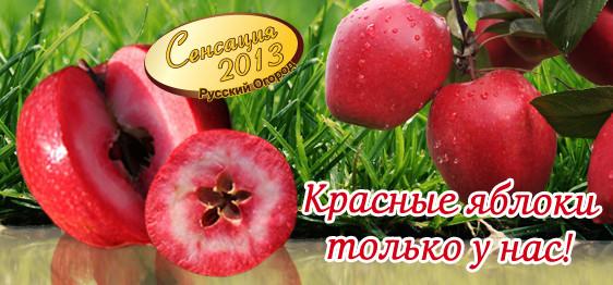 Интернет магазин русский огород нк